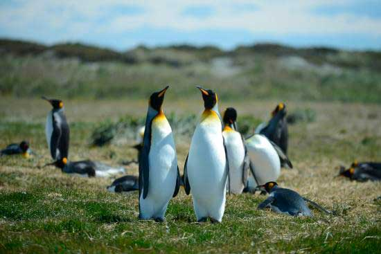 Activity Penguins King Rey Punta Arenas