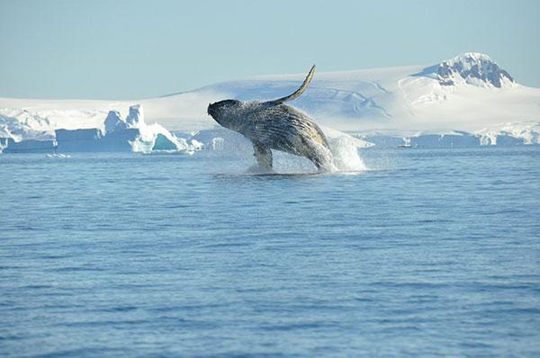 "Antarctic Peninsula Ocean Wide the ""Classic Antarctic"" Route"