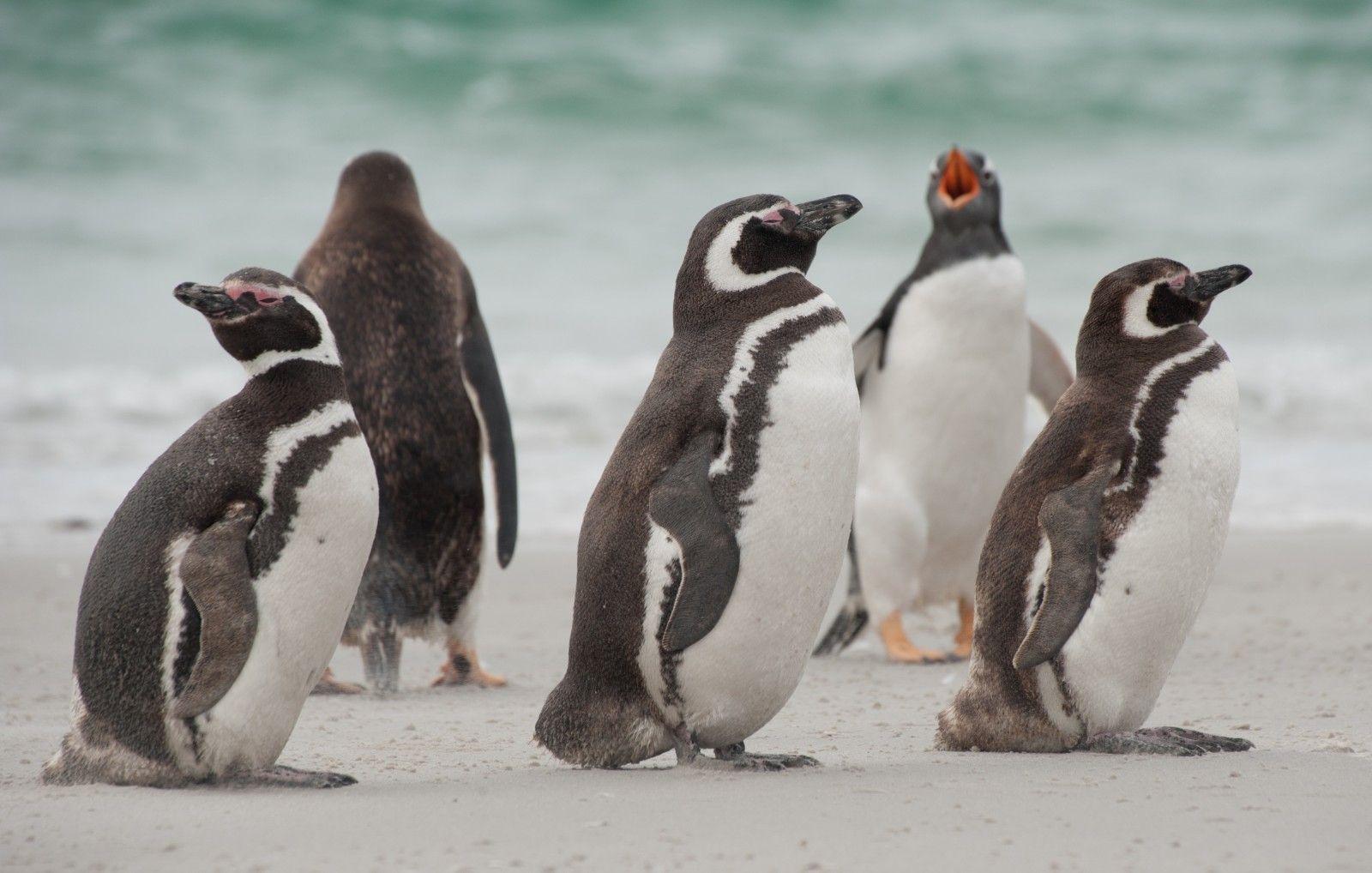 Activity Penguins Santa Magdalena Punta Arenas