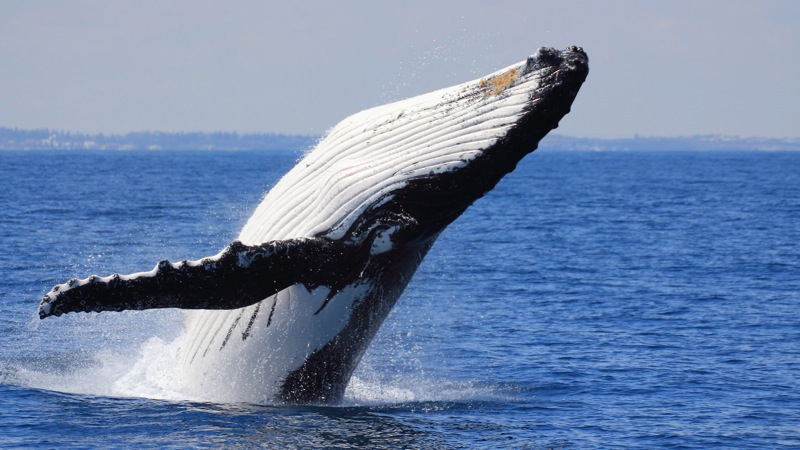 Whale Watching Full Day Punta Arenas